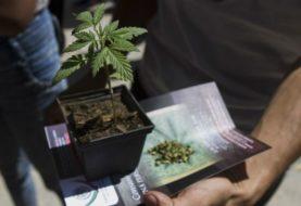 Senado aprueba reforma que permite uso medicinal de la mariguana